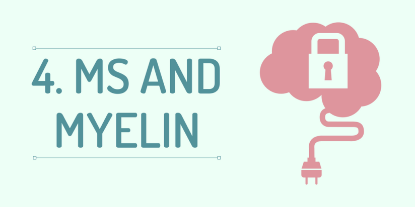 MS and Myelin